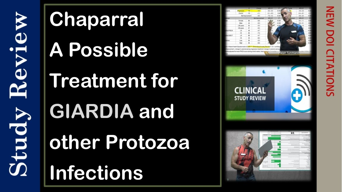 Chaparral maybe effective against Giardia and other parasites